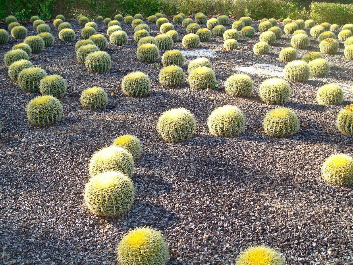 cactus-labyrinth