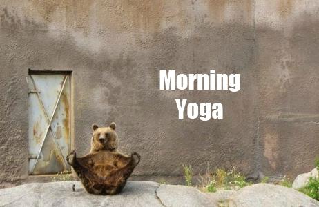 Funny-bear-stretching