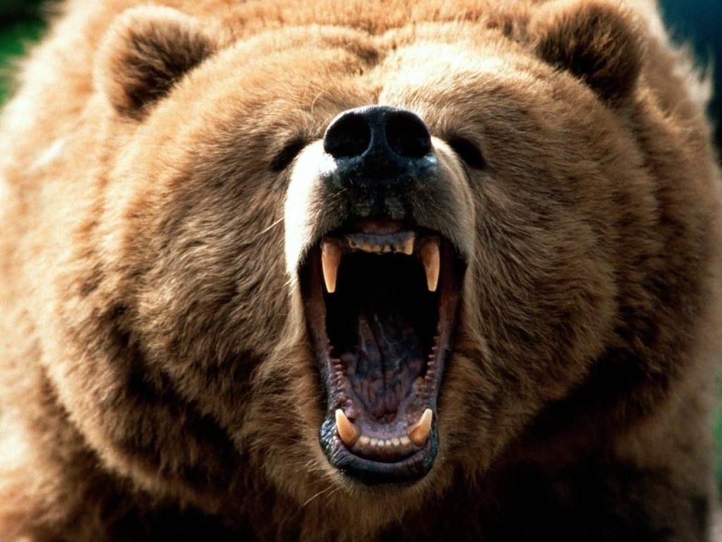 angry funny animal