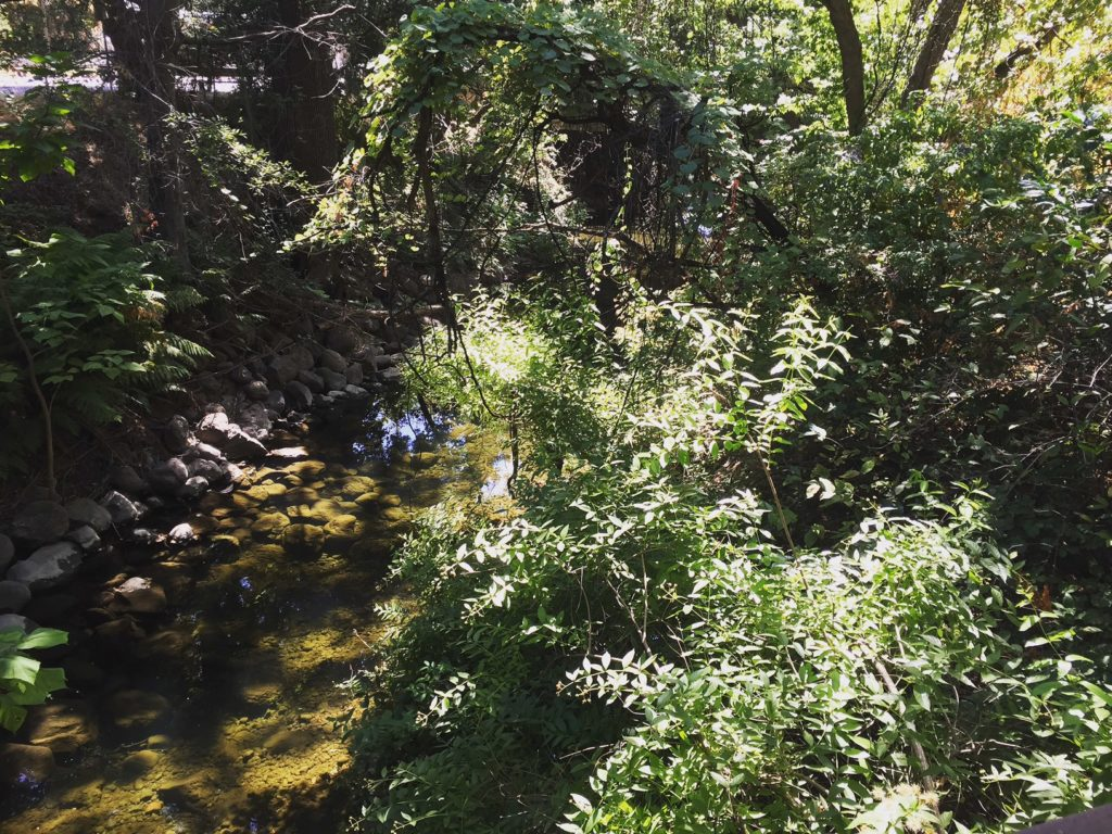 Big Chico Creek