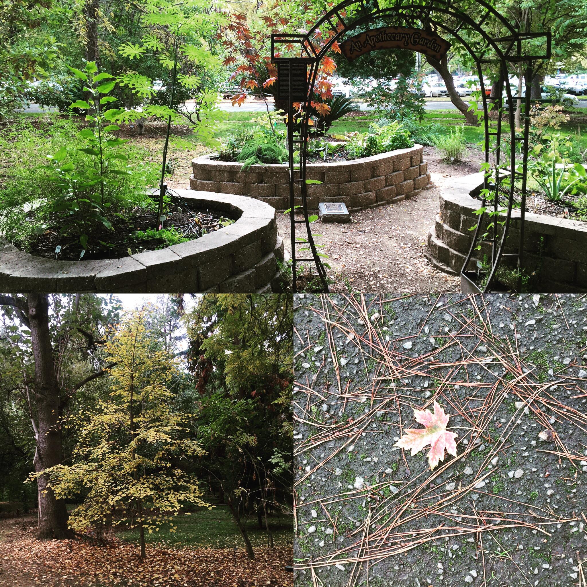 Sacramento State Arboretum