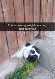 funny-dog-snapchats-60-581af79269707__700