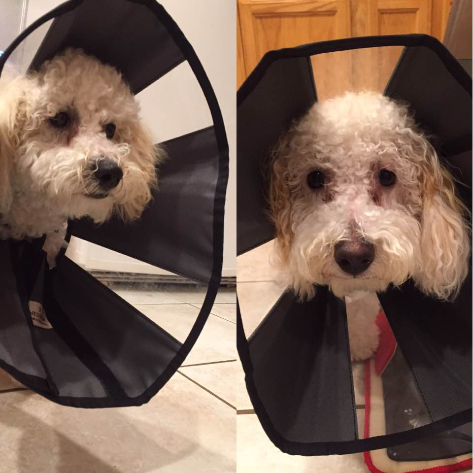 Puppies in cones