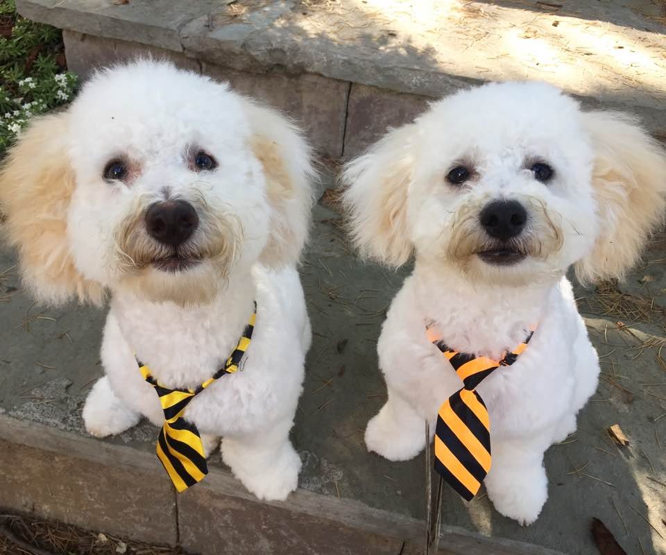 Dogs in ties