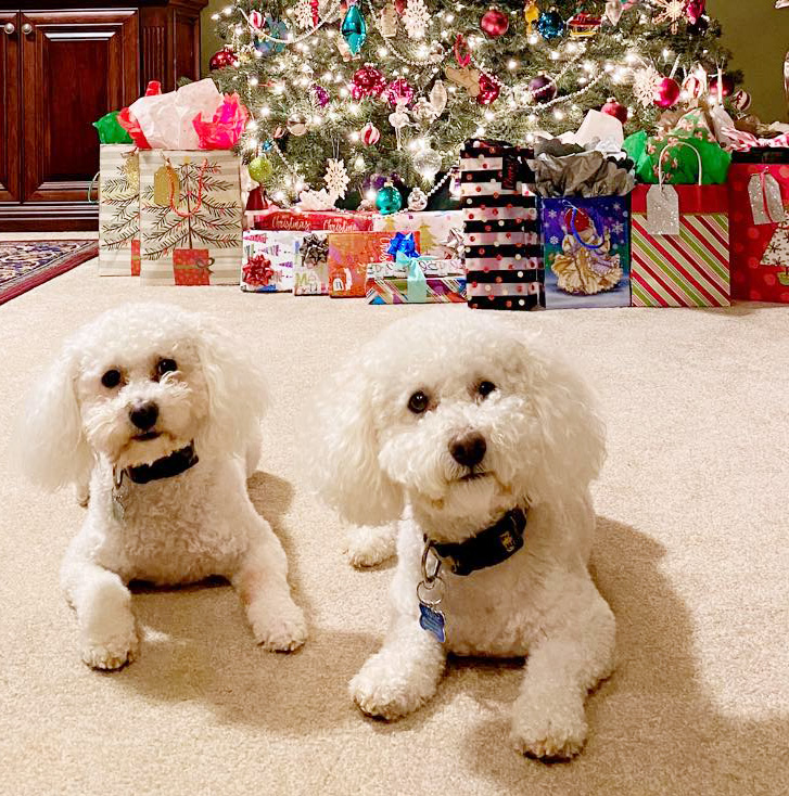 Dogs in front of Christmas tree