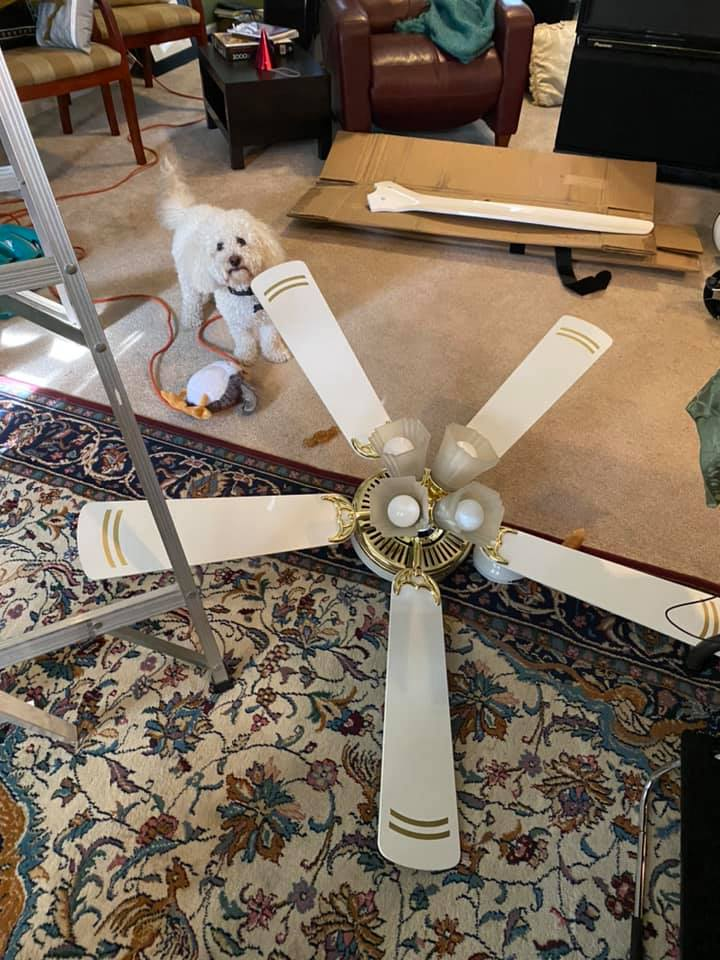 Old ceiling fan and dog
