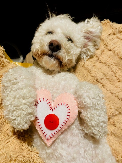 Dog with heart pillow
